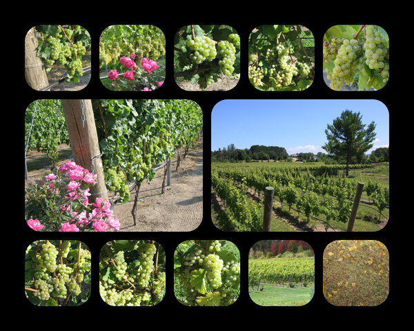 traverse-city-michigan-old-mission-peninsula-vineyard