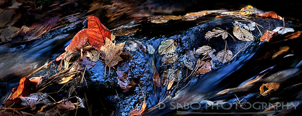 d-sabo-photography-nature-photography-smugmug-customization