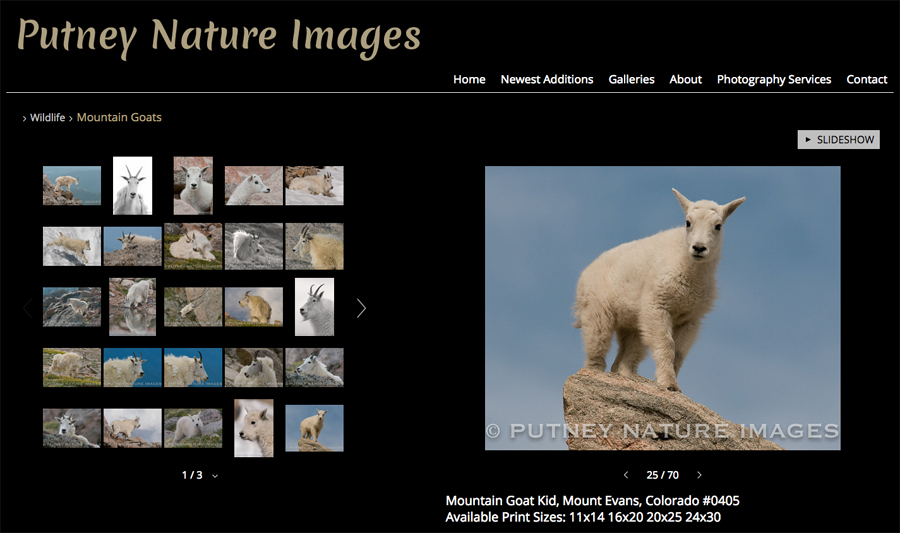 new-SmugMug-Customization-Putney-Nature-Images-Colorado-Wildlife-Nature-Photography-jrcustomization-02