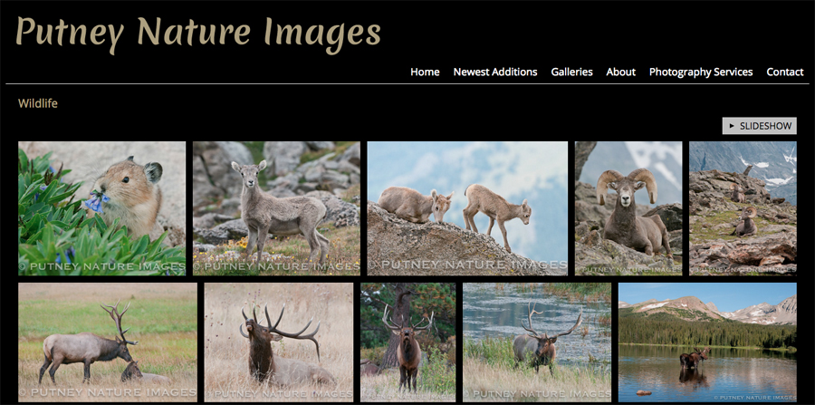 new-SmugMug-Customization-Putney-Nature-Images-Colorado-Wildlife-Nature-Photography-jrcustomization-03