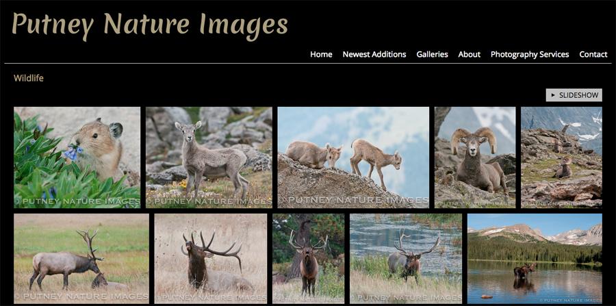 new-SmugMug-Customization-Putney-Nature-Images-Colorado-Wildlife-Nature-Photography-jrcustomization-03